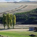 Dehesa de R.paisaje (2)